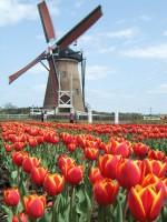 Dutch Courage